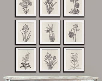 Wild Flower Botanical Prints (Series G2) Set of 9 - Art Prints (Featured in Charcoal on Stone Wash) Vintage Modern Art Prints