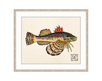 "Sea Robin 11""x14"" Giclee Print Of A Watercolor Painting for the Salt Water Angler. Gurnard Fish. Bottom Feeder."