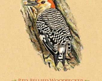Woodpecker, Red Bellied Woodpecker. Giclee Art Print.