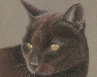 Gift Certificate, Custom Pet Portrait, Pastel Pet Portraits, Original, Hand Drawn from your Photo