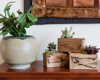 Succulent Planters with Lichtenburg Figures