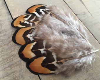 Reeve's Pheasant feathers - earthy brown, natural feathers, real feathers, brown feathers, pretty feathers, smudge feathers, craft feathers