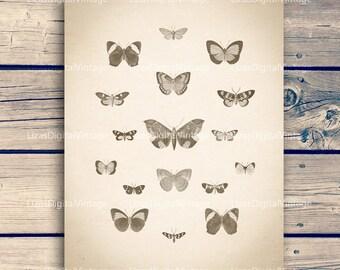 "Printable art, Insect print, Insect wall art, Butterfly vintage, Butterfly print, Insect poster, Butterfly digital, 11""x14"";8""x10"" 300dpi"