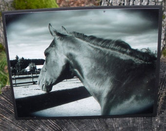 Black and White Horse Head Picture Card