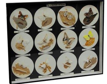 school teaching display butterflies and moths and their caterpillars