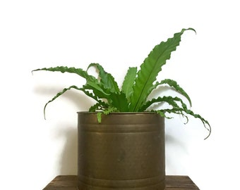 Large Vintage Brass Hammered Planter