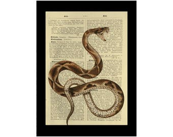 Vintage Snake Illustration Fangs - Dictionary Print Book Page Art