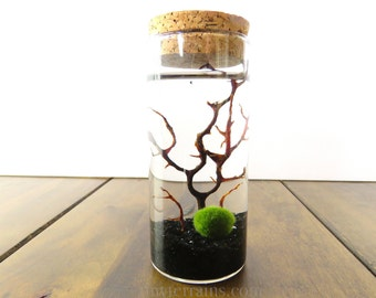 Marimo Terrarium Kit: Medium Cork Jar, Terrarium Kit, Marimo Moss Balls, 23 Colors, Gift Wrap, Card, Fast Shipping
