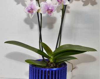 Carousel Orchid Pots with Drip Trays