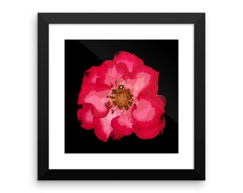 Red and Pink Antique Rose Art Print Framed poster