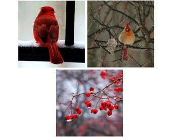 Christmas Stocking Stuffer Holiday Decor Cardinals Berries Red Fine Art Photography Prints Woodland Nature Red Winter Print Pack 5x5