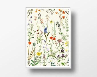 Botanical floral Vintage Print - Art poster Wall art home decor - plants antique books - Digital art old vintage flowers - Nature art - NG34