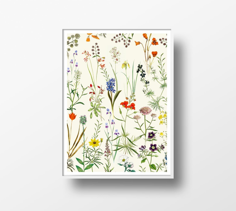 Ilustracion botanica vintage Arte poster wall art decoración