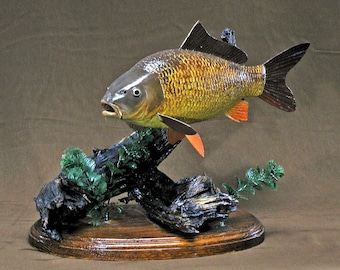 Carp fish - wood carved fish sculpture, taxidermy, fishcarving