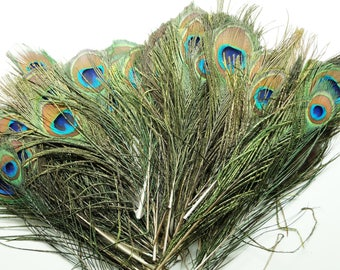 Lot of 10 natural peacock feathers, 20-30 cm