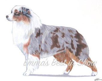 Australian Shepherd Aussie Dog - Archival Original Fine Art Print - AKC Best in Show Champion - Breed Standard - Herding Group