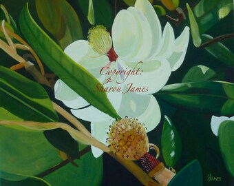 Magnolia Beauty - Oil Painting by Artist Sharon James, 24 inches x 20 inches