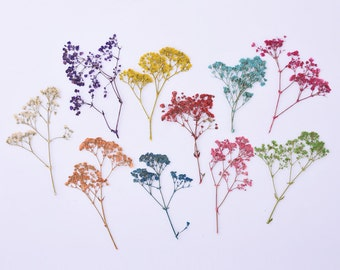 1 Pack Natural Dried Flowers Baby's Breath Craft DIY Jewelry Making Mixd color 10098049