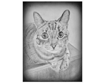 Custom Cat Portrait, Custom Pet Portrait, Cat Lover Gift, Pencil Drawing of Cat, Pencil Sketch of Cat, Custom Cat Drawing, Earth Child Art