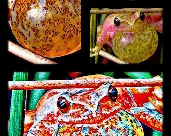 Peeper Popper Collage