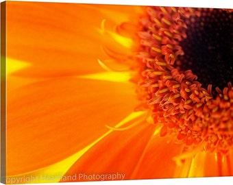 Large Macro Canvas, Orange Daisy, Large Photo Canvas, Macro Photography, Orange Flower, Photography Canvas, Orange Home Decor, Macro Flower