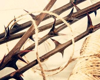 10'' Natural  10 acacia twigs rustic decor dried flower arrangement thorntree rustic home decor dried acacia sticks farmhouse magic decor