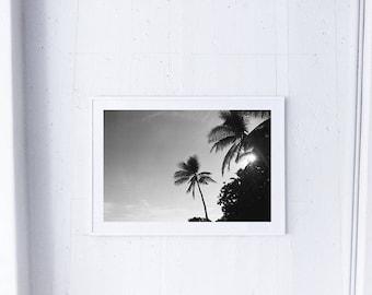 Palm Tree Print/ Tropical/ Island Print/ Print/ Beach Print/ Black and white Print/ Sun Print/ Wall Art/ Wall Decor/ Art Print/ Pacific
