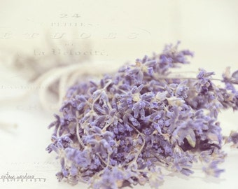 french lavender-flower photography - flower photo- cottage garden photography - Original fine art photography prints - FREE Shipping