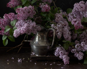 Lilac - Still Life Photography - Photo Print - Art Photography (VLDR02)