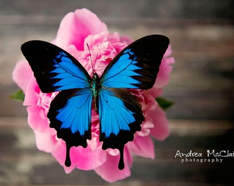 Butterfly & Peony ~ 8x10 Photo Print