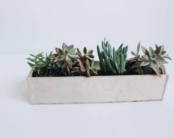 Large Succulent Holder