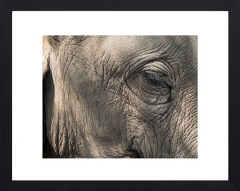 The blink of an eye - elephant print- animal photography - wildlife photography - elephant photograph - father's day gift