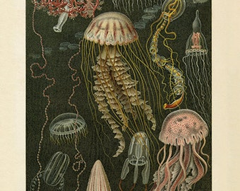 Gorgeous Jellyfish Art Print - Vintage Style-Style Wall Art - Museum Quality