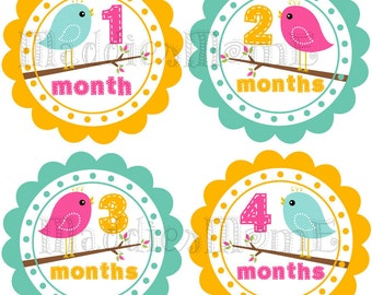 Monthly Baby Girl Stickers Baby Month Stickers, Monthly Bodysuit Sticker, Monthly Stickers Bird (Jessica)