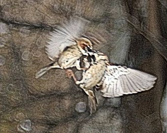 """Fine Abstract Art """"Dance Of The Sparrows"""" An Oil Painting Through The Camera Lens Photography By Scott D Van Osdol Wildlife Photograph Print"""