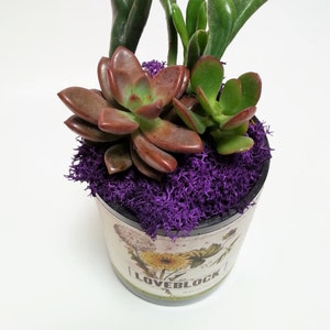 Wine Bottle Garden / Wedding Favor / Babyshower Centerpiece / Glass Succulent Planter /  Wine Gifts /  Gift Ideas Indoor Plants / Cut bottle