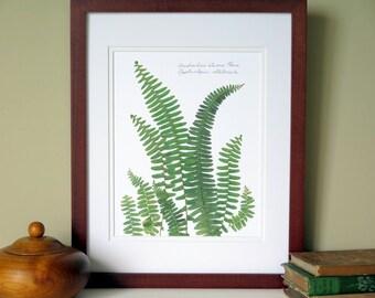 Pressed fern botanical print, 11x14 double matted, Australian Sword fern, no. 0090