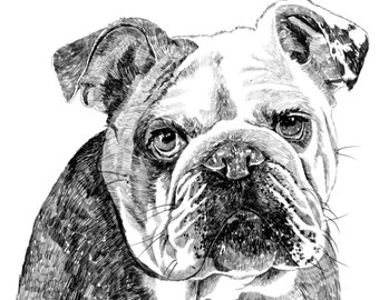 Bulldog Print
