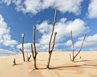 Silver Lake State Park - Sticks and Sand - Michigan Photography - Stock Photography