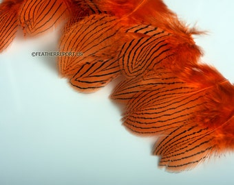 Orange Craft Feathers Silver Pheasant Feathers Bright Orange Colored Craft Feathers Fly Tying Feathers Small Feathers for Crafts, 12