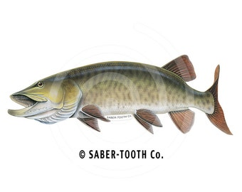 Musky Fish Decal Sticker
