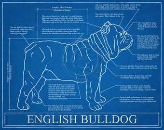 English Bulldog Blueprint Elevation / English Bulldog Art / English Bulldog Wall Art / English Bulldog Gift / English Bulldog Print