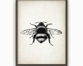 Bumble Bee Wall Art Poster - Antique Bumblebee Illustration (AB46)