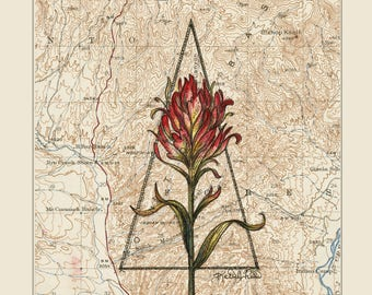 Indian Paintbrush Wildflower Print, red alpine flower painting print, Mountain illustration, prairie flower vintage topography map art
