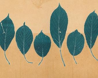 Leaves On Sand Giclee Print
