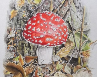 Toadstool - An Original Drawing in Colour Pencil