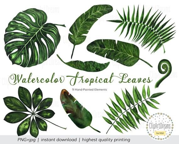 tropical leaf clipart tropical leaves watercolor clipart rh etsy com Tropical Plants Sunflower Clip Art