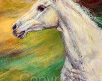 "Arabian Horse Painting-Horse Art Print-""Sapphire"" by Janet Ferraro"