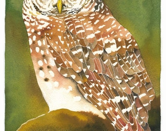 "Limited Edition GICLEE PRINT / ""Forest Eyes"" / Watercolor Painting of Spotted Owl"