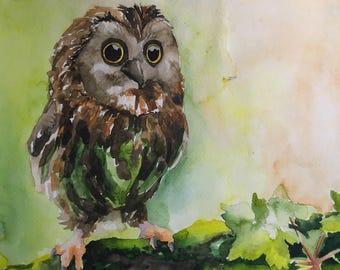 Watercolor owl bird beautiful